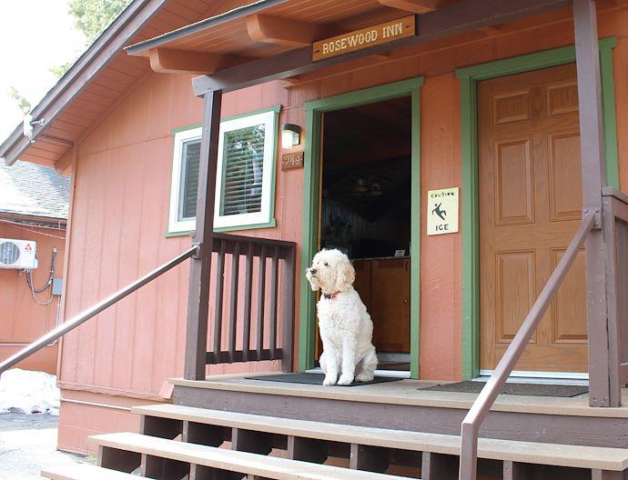 Pet-friendly Package At The Pines Resort Bass Lake California
